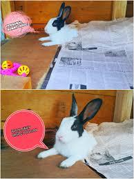 Funny Rabbit Memes - funny bunny memes album on imgur
