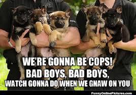 Funny German Shepherd Memes - funny cop dog meme