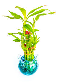 divine vastu tips plants and trees to keep in your house for