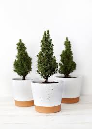 small christmas tree mini christmas trees packed with and cheerfulness