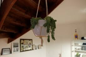5 beautiful space saving hanging plants plants by bird
