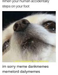 Sorry Memes - 25 best memes about im sorry memes im sorry memes