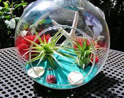 71 best gift ideas images on pinterest terraria terrarium kits