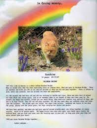 grieving the loss of a pet rainbow bridge pet loss grief support monday candle ceremony
