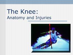 Interactive Knee Anatomy The Knee Anatomy And Injuries Ppt Video Online Download