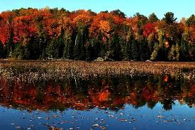fall colours reflected lake picture algonquin provincial