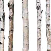 White Decorative Branches Decorative Birch Branches