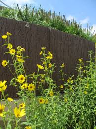 native plants of the northeast t h e d e e p m i d d l e native plant gardens in lincoln