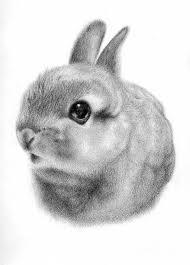 bunny drawing by angela qian