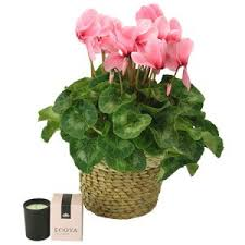 mothers day plants mothers day ordering