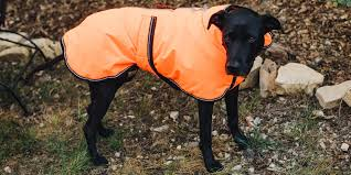 the best winter jackets and raincoats for dogs wirecutter reviews