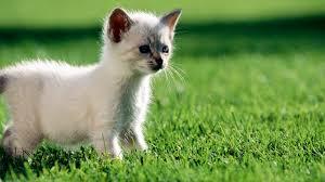 desktop wallpaper download hd cat 49481 animal