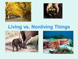 do now list as many living things as you observe then list as