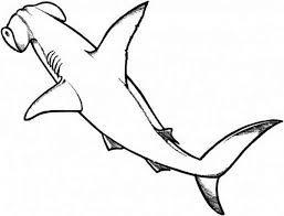 drawing hammerhead shark coloring kids