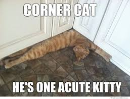 corner cat meme weknowmemes