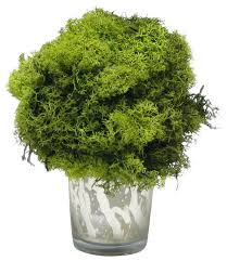 Topiary Balls With Flowers - reindeer moss topiary ball in mercury glass votive transitional