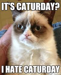 Caturday Meme - it s caturday cat meme cat planet cat planet