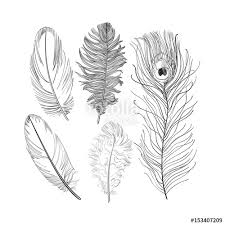 hand drawn set of various black and white bird feathers sketch
