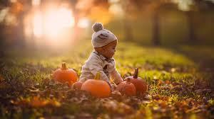 autumn pumpkin wallpaper widescreen baby nature sunlight pumpkin fall wallpapers hd desktop and