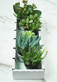 irish terrariums darling darleen a lifestyle design blog