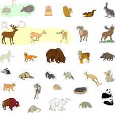 images of mammals animals list spfc wallpaper iphone katrina