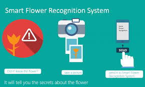 Identify Flowers - microsoft project uses machine learning to identify flowers