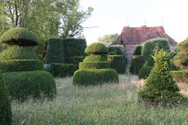 Elephant Topiary Image Result For Yew Topiary Yew Topiary Pinterest