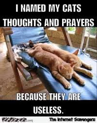 Meme My Photo - i named my cats thoughts and prayers funny meme pmslweb