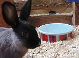 rabbits teachers