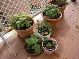 balkon pflanzgefã ãÿe chestha kücheninsel kräuter idee