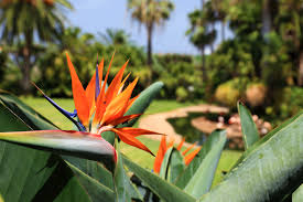maui native plants top 3 care tips for hawaiian plants south maui gardens kihei