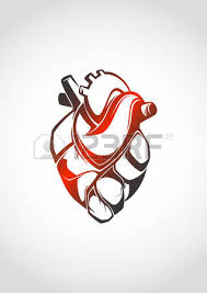 abstract anatomical heart royalty free cliparts vectors and