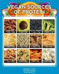welcome to vegan information com where do you get your protein