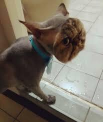 Persian Cat Meme - create meme arvin arvin persian cat cat meme