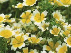 fairy garden flowers and plants hgtv