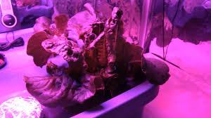 1000 watt led grow light reviews growing lettuce indoors review of the cob 300 watt led grow light