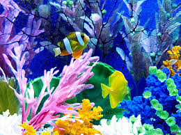 50 aquarium backgrounds download u0026 print free u0026 premium