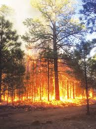 Wildfire Wedding Photos by Crews Drop Exploding Balls To Help Contain Wildfire In Coconino