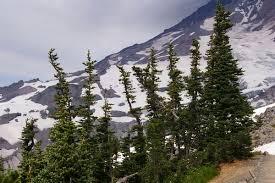 alpine tree line photo