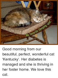 Diabetes Cat Meme - sleeping favorite my good morning from our beautiful perfect