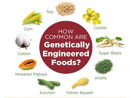 About Gmo Foods Just Label It