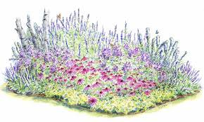 perennial flowers how to grow and care for perennials the old