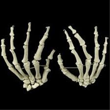 life size bucky skeleton hands pair bones prop building pair set