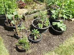 Vegetable Container Gardens Container Vegetable Gardening Ideas Dunneiv Org