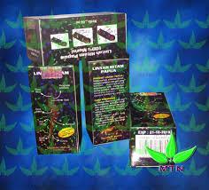 minyak urut lintah oil papua pembesar alat vital pria alami cepat
