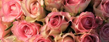 Bulk Roses Wholesale Flowers For Events And Weddings Wholesaleflowers Net