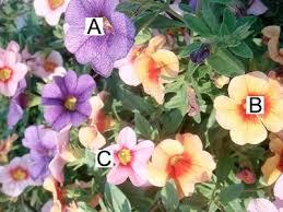 Vinca Flowers Container Garden Pictures A U003d Petunias B C U003d Vinca
