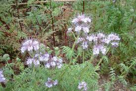 Identify Flowers - plantmaster blog please help us identify these plants