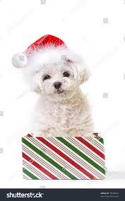 dog santa hat stock photo 19528810 shutterstock
