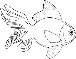 clownfish clipart fish product pencil and in color clownfish